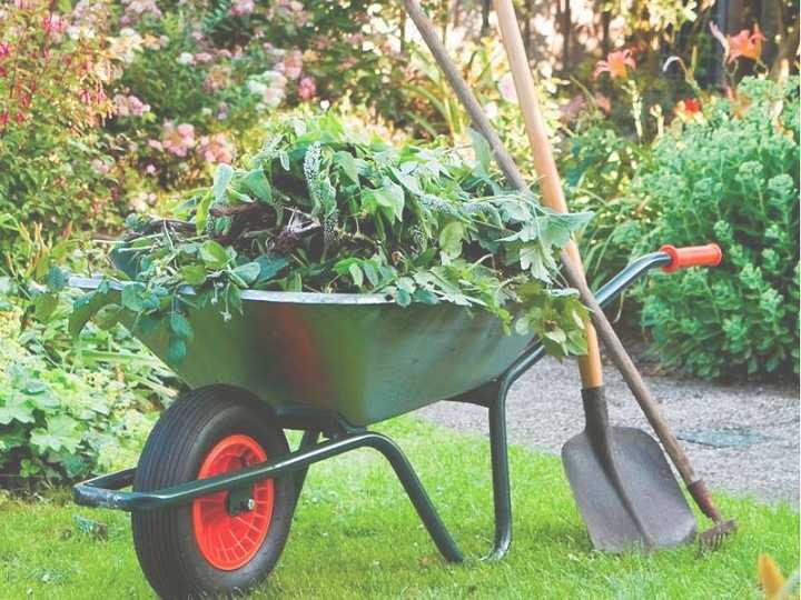 garden-maintenance-randburg-sandton.jpg