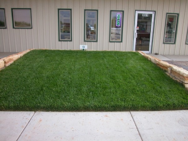 Green-Square Instant lawns